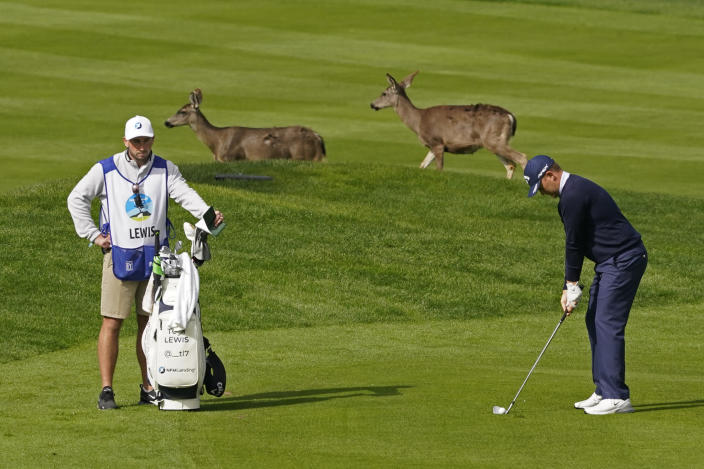 Tom Lewis, right, of England, prepares to hit his approach shot to the sixth of the Spyglass Hill Golf Course as a pair of deer cross the fairway during the second round of the AT&T Pebble Beach Pro-Am golf tournament Friday, Feb. 12, 2021, in Pebble Beach, Calif. (AP Photo/Eric Risberg)