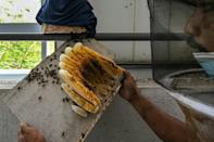 """In Malaysia, green activists founded the """"My Bee Savior Association"""" to help stem the decline of bee populations"""