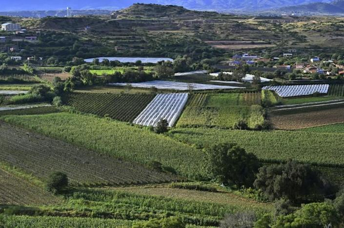 View of vineyards at Valle de la Concepcion in the Tarija department in Bolivia this are located between 1,600 and 2,000 meters above the sea level