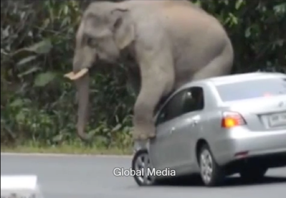Angry elephant squashes car on rampage in Thailand