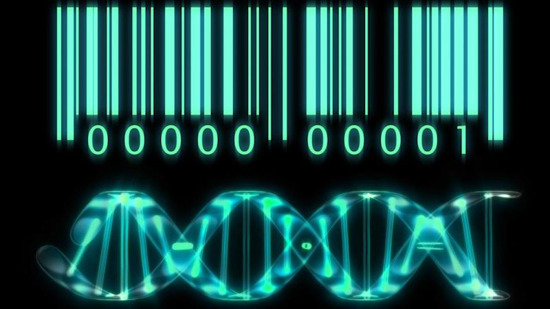 Scientists track down cancer immunity genes with new barcoding technology