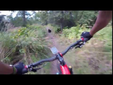 <p>A rider in Kincaid Park, Alaska, was so surprised to run into a black bear on the trail that he crashed his bike. </p><p><span>See the original post on Youtube</span></p>