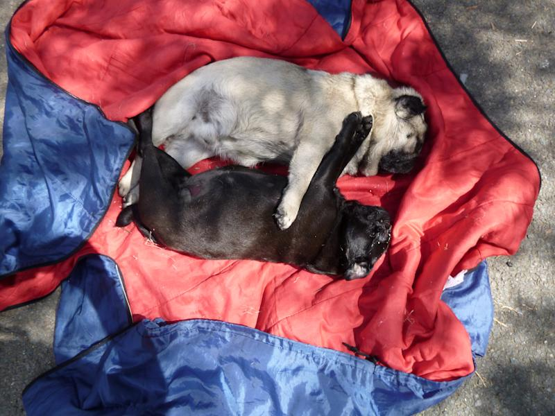 A couple who left two dogs in a tent for so long during a scorching summer's day that they cooked to death (Picture: SWNS)