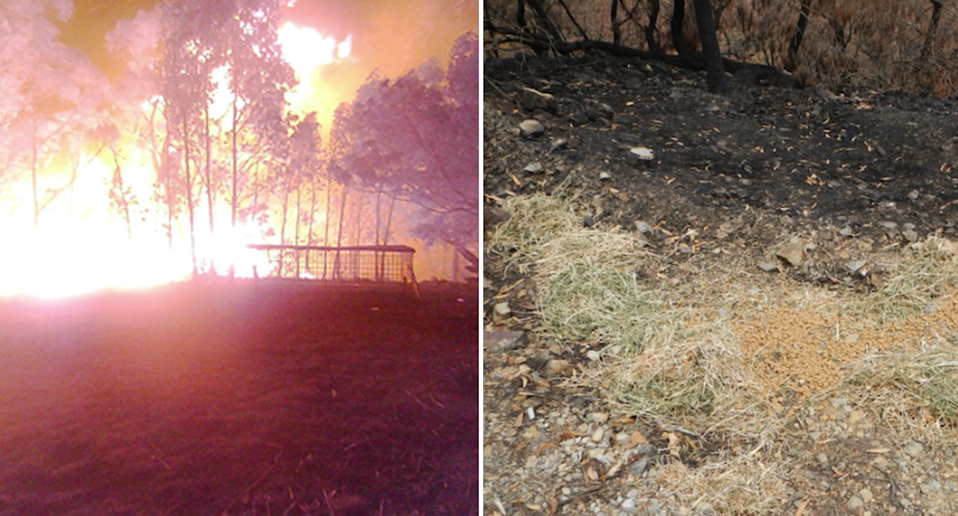 Split screen. Left - security camera vision Ms Bisset's property burning in the fires. Right - Hay and pellets dumped on the ground in a burnt out area.