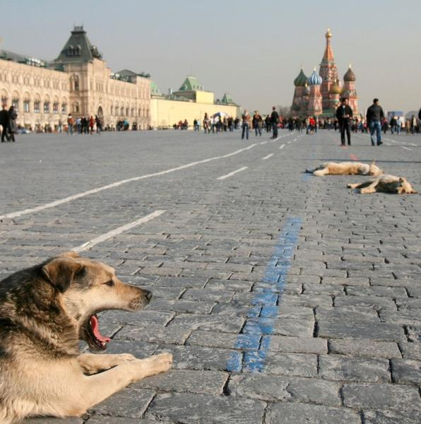 FILE PHOTO: Stray dogs rest in the warm spring sunshine in Red Square in Moscow