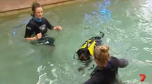 Paz is getting more comfortable in the water. Source: 7News
