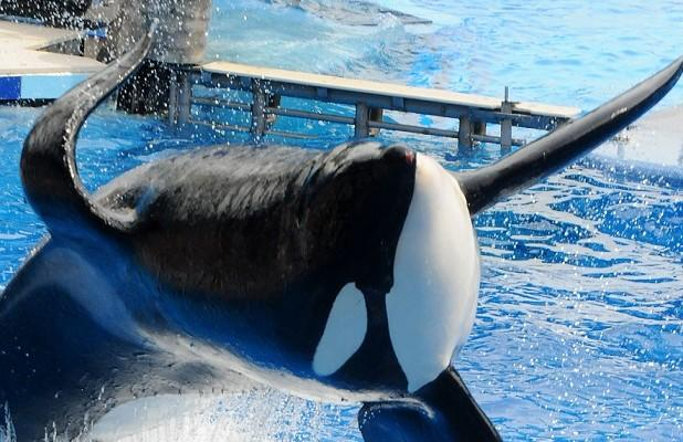 SeaWorld Pays $65 Million to Settle 'Blackfish'-Related Lawsuit