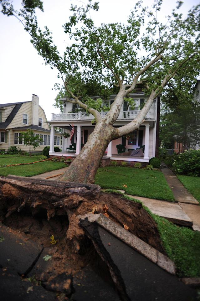 A Tree is uprooted during a thunderstorm damaging a house on the 600 block of N. Bradford St. Thursday, June 13, 2013 in Dover, Del. A massive storm system that started in the Upper Midwest and plowed across the country was hitting the Mid-Atlantic Thursday, causing widespread power outages and flash flooding, but still largely failing to live up to its fierce billing. (AP Photo/The Wilmington News-Journal, Gary Emeigh) NO SALES