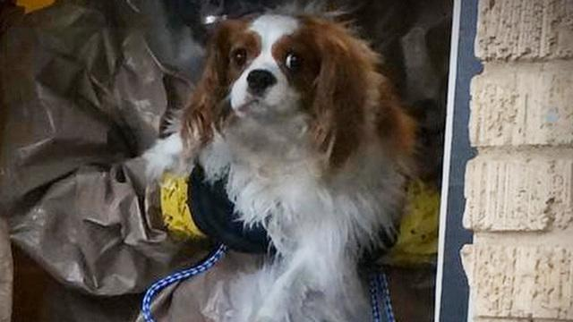 The dog belonging to the Dallas nurse infected with Ebola has been moved to quarantine in a decommissioned naval base. Nina Pham was happy to hear Bentley was doing just fine. Jane Pauley reports.