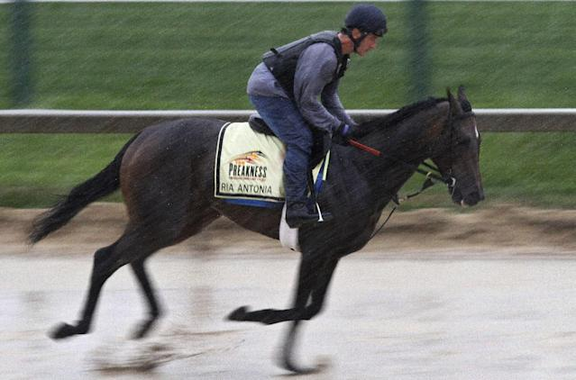 Preakness Stakes entrant Ria Antonia gallops in the rain under exercise rider Maurice Sanchez at Pimlico Race Course, Friday, May 16, 2014, in Baltimore. The 139th Preakness horse race takes place Saturday. (AP Photo/Garry Jones)