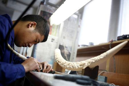 China shuts some ivory factories, Hong Kong seen as a loophole DTiNews
