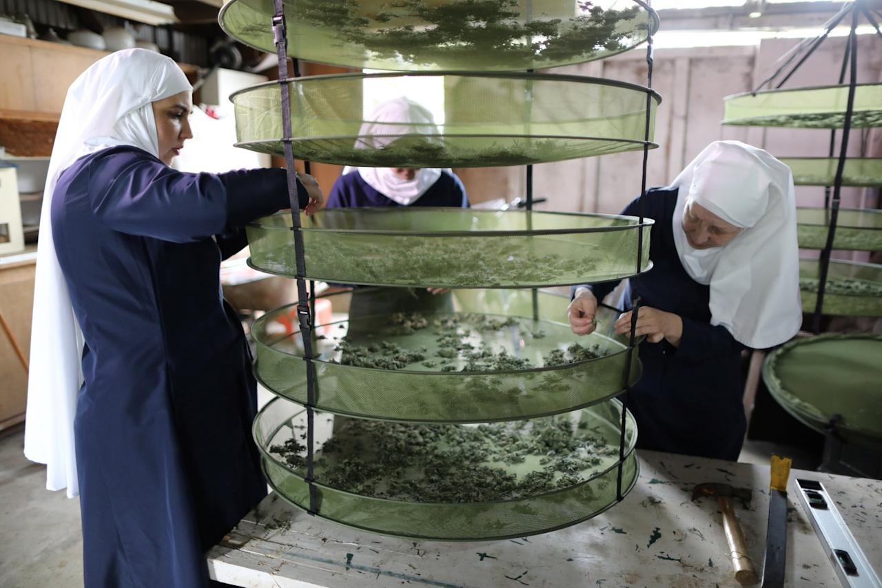 <p>Sister Kate, right, Sister Freya, and Sister Eevee check hemp that is drying at Sisters of the Valley near Merced, California, U.S., April 18, 2017. Photo from Reuters </p>