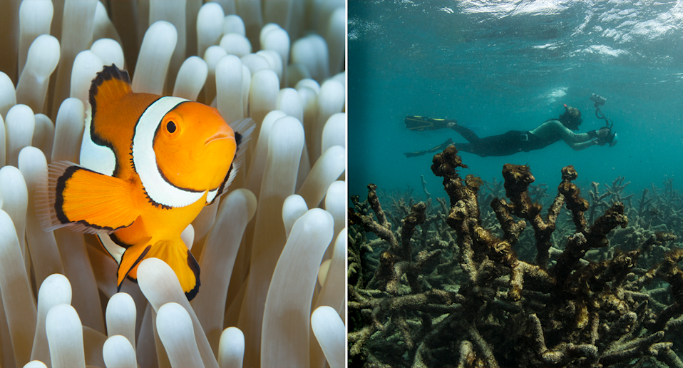 Greenpeace's David Ritter is hoping the Reef is listed as