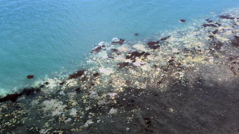 Death of the reef looms: top scientists