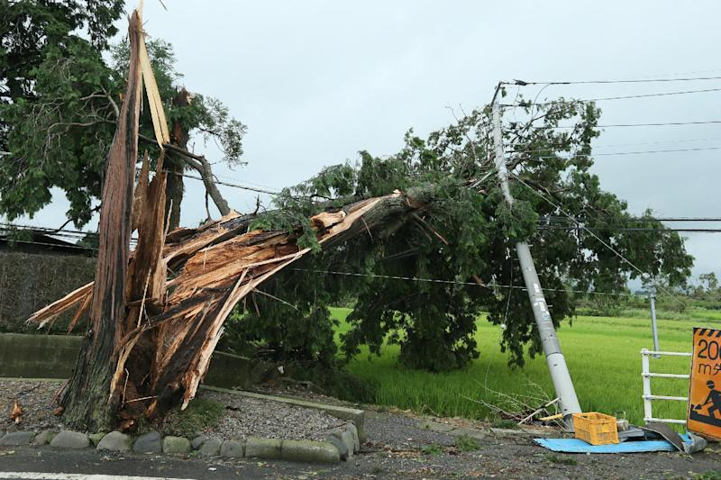 Photo taken on August 10, 2014 shows a tree knocked over by strong winds in Tochigi, north of Tokyo (AFP Photo/Jiji Press)