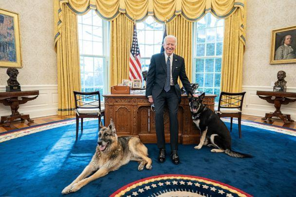 PHOTO: President Joe Biden is pictured with the Biden family dogs Champ, left, and Major on Feb. 9, 2021 in the Oval Office of the White House in Washington, D.C. (Adam Schultz/Official White House Photo by Adam Schultz)