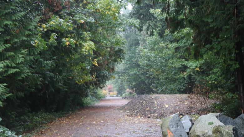 More UBC trees get axed to make way for market housing