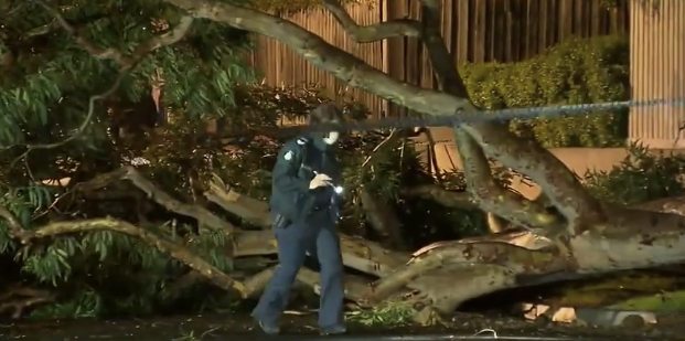 A police officer inspects the area of the fallen tree in Blackburn South. Source: Nine
