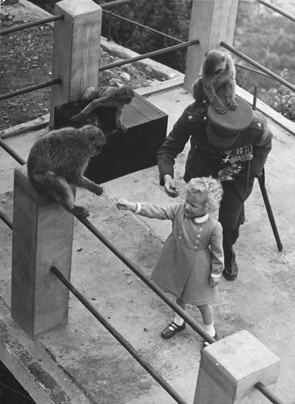 <p>An escorting officer finds himself otherwise occupied while Anne plays with the Barbary apes during a visit to Gibraltar. </p>