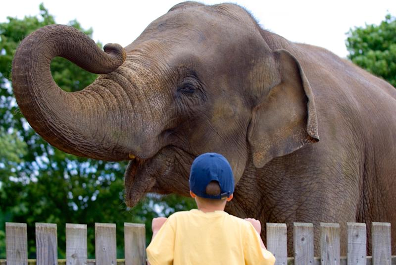 Human Behavior Toward Animals Hasn't Caught Up to the Science