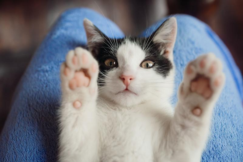New York is the first state to totally ban declawing cats -- with exceptions for when it's medically necessary for the cat. (Photo: Barisic Zaklina via Getty Images)