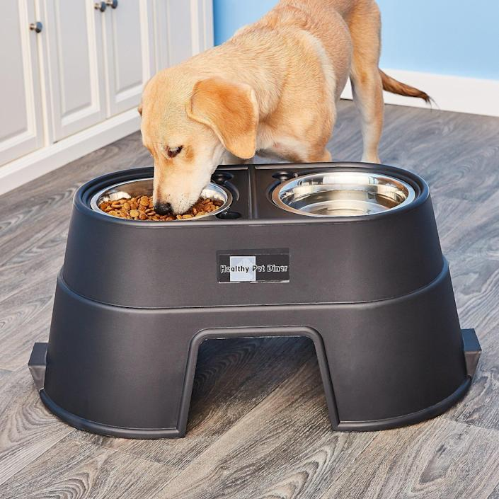 OurPets Comfort Elevated Dog & Cat Feeder (Photo: Chewy)