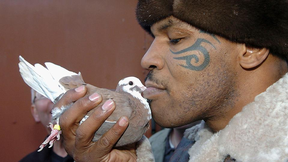 Mike Tyson loves nothing more a bit of pigeon racing!