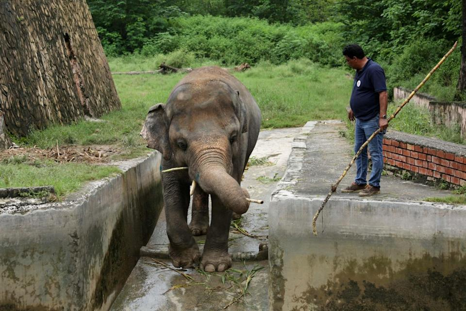 The elephant lost his partner in 2012 and has battled since with loneliness as well as his poor living conditions (Reuters)