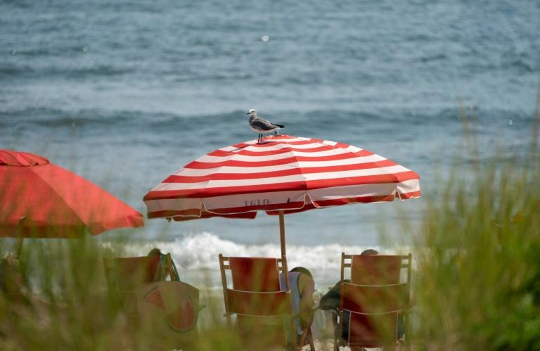 Seagulls search for food near the boardwalk in Ocean City, New Jersey -- they have become a menace to tourists