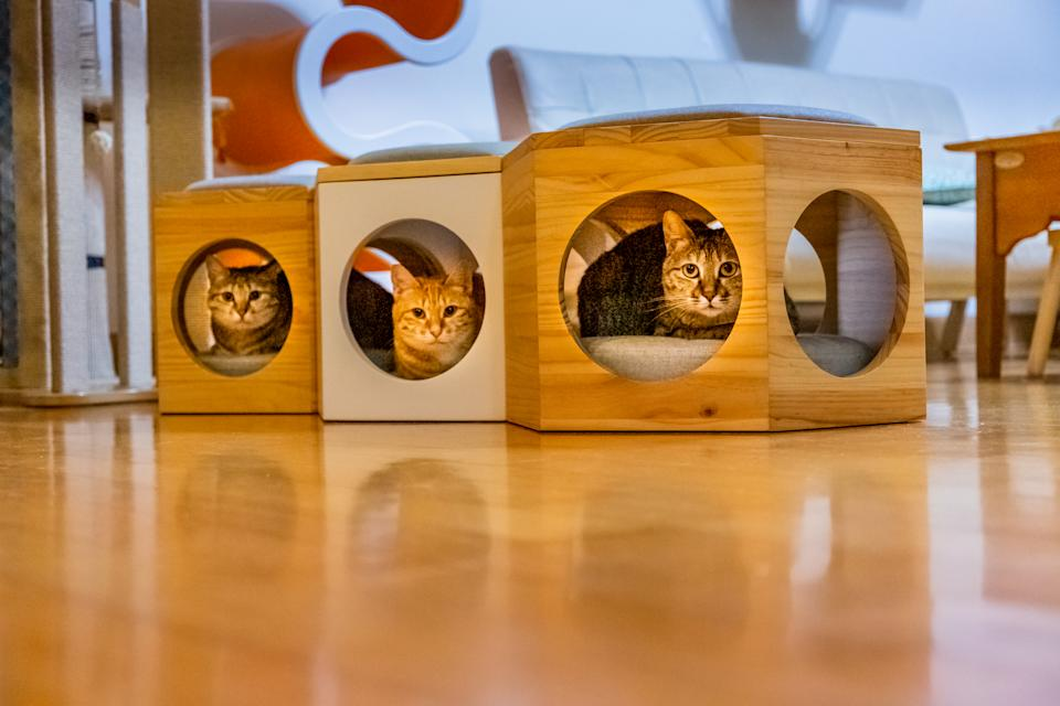 Indoor shot of 3 domestic cats sitting in the cat chairs in a row separately.