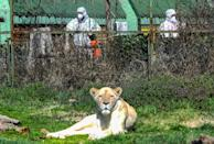 Workers disinfect the area surrounding the lion enclosure at Skopje Zoo
