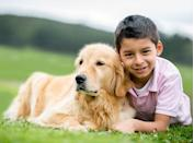 <h2>Golden Retriever</h2> <p>Famously obedient, this beautiful breed is also known for its endless affection and patience.</p>