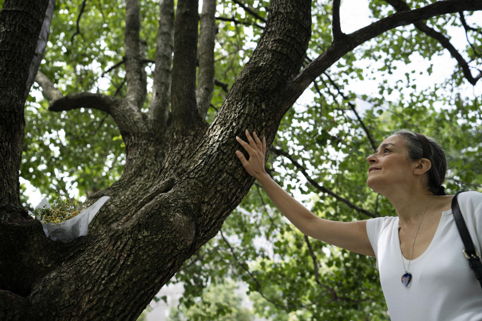 """Joan Mastropaolo, a 9/11 Tribute Museum board member, volunteer and local Battery Park city denizen since 1998, places her hand on the Survivor Tree at the 9/11 Memorial & Museum, Monday, Aug. 16, 2021, in New York. The Survivor Tree, living at the site before the attacks, was rehabilitated by the parks department after suffering burn damage and broken limbs in the collapse. For Mastropaolo, the Callery pear tree, unique to the memorial and surrounded by guard rails, is a symbol of resiliency. """"When they started bringing the trees to this site, for me, that was a symbol of returning life,"""" Mastropaolo said. (AP Photo/John Minchillo)"""