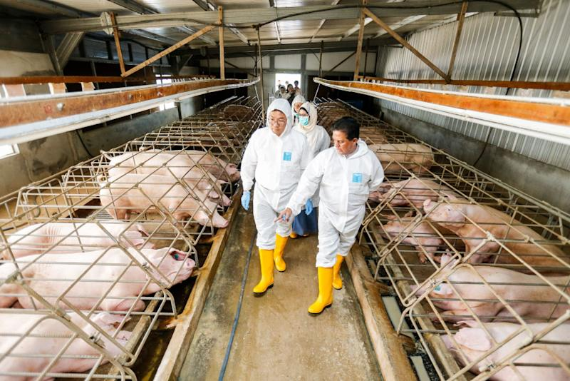 Deputy Minister of Agriculture and Agro-based Industry Sim Tze Tzin (left) with Department of Veterinary Services director-general Datuk Dr Quaza Nizamuddin Hassan Nizam during their visit to the KB Wong and Brothers Farm pig farm in Valdor, Sungai Bakap, June 24, 2019. — Picture by Sayuti Zainudin