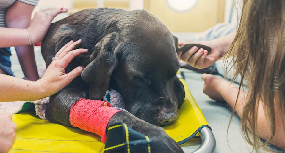 Debate rages about pet euthanasia. Source: Getty (file pic)