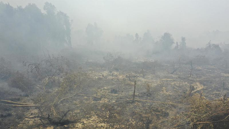 Toxic haze from forest fires closes schools, airports in Indonesia, Malaysia
