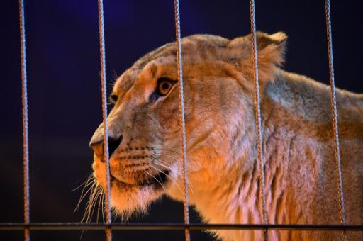 Polls show a vast majority of French people to be against the use of animals for entertainment