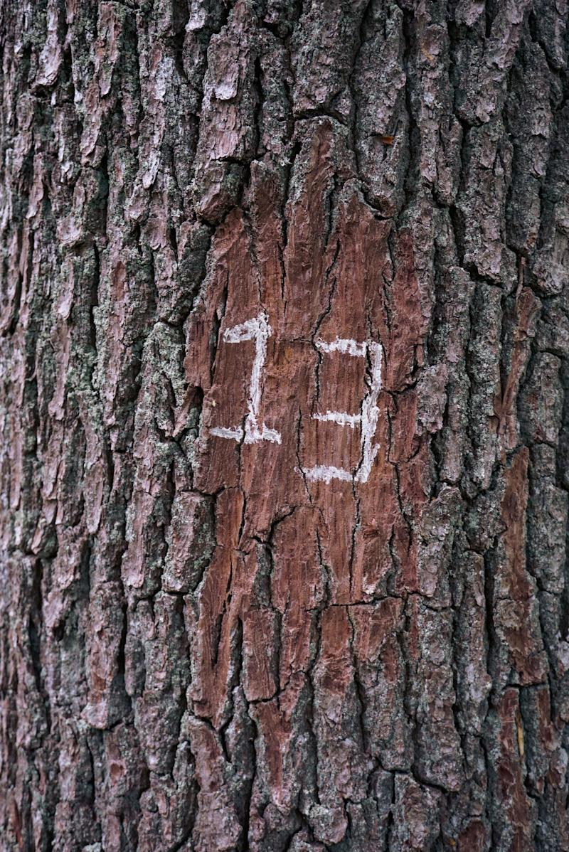 the number 13 written on a tree trunk