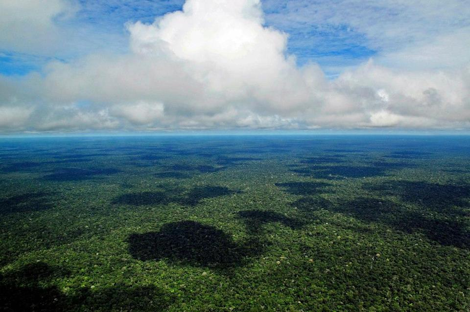 The Amazon rainforest as seen from the cloud line