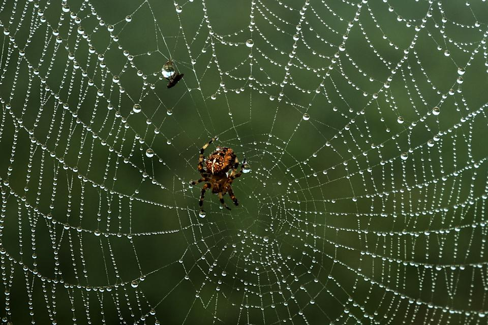 A picture taken on August 22, 2019 shows a fly and a spider at Tancarville, northwestern France.