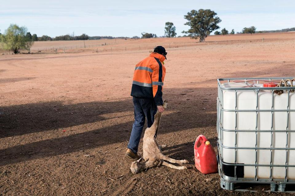 <p>In June the New South Wales State government approved an emergency drought relief package of A$600m, of which at least A$250m was allocated for low interest loans to assist eligible farm businesses to recover. [Picture: Brook Mitchell/Getty Images] </p>