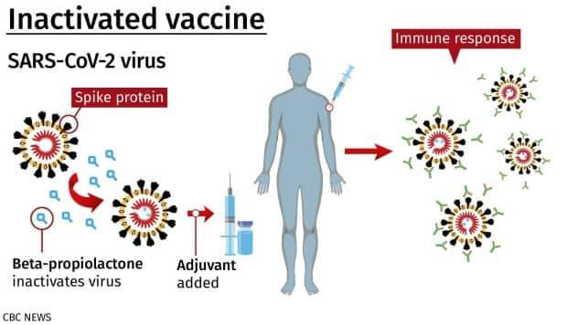How inactivated vaccines for COVID-19 are made and how they work.