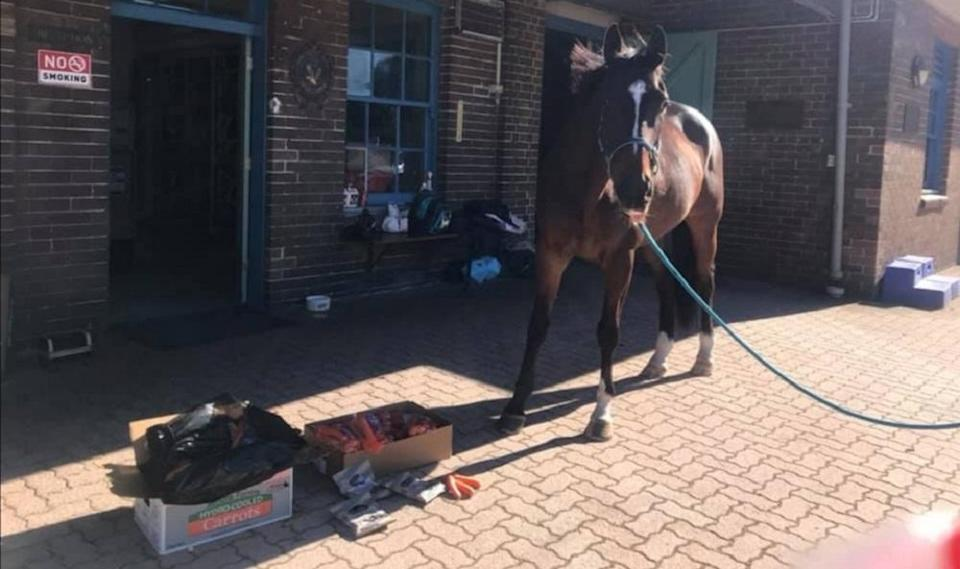Tobruk the police horse has been showered with treats after being hit by an anti-lockdown protester in Sydney, Australia. — Picture via Facebook/ Mounted Unit — NSW Police Force