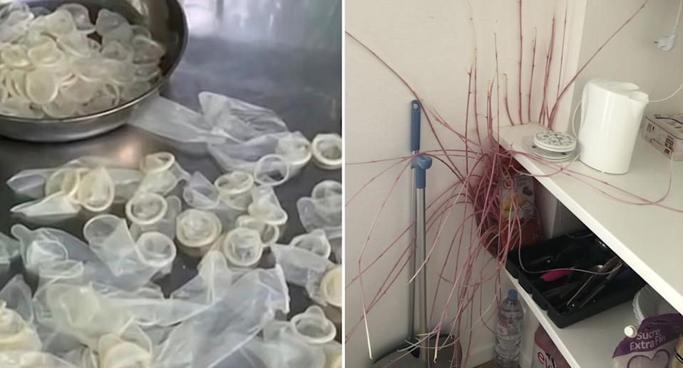 Left are used condoms a Vietnamese factory were caught washing. Pictured right is a woman's potatoes taking over her apartment.