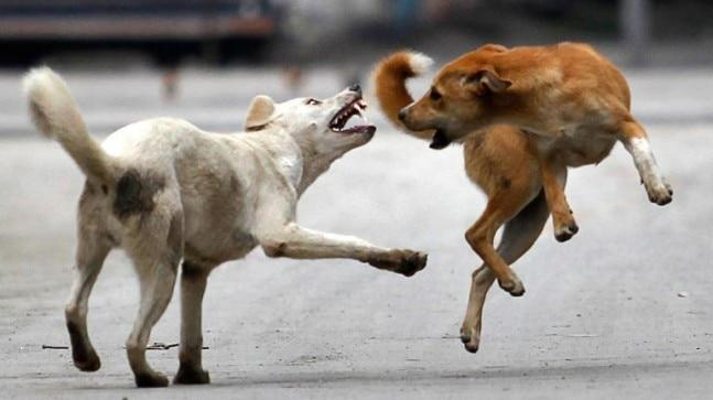 Cases of dog bites have skyrocketed in Punjab; more than 1 lakh cases of dog bites - some which led to the death of victims - have been reported in both 2017 and 2018.
