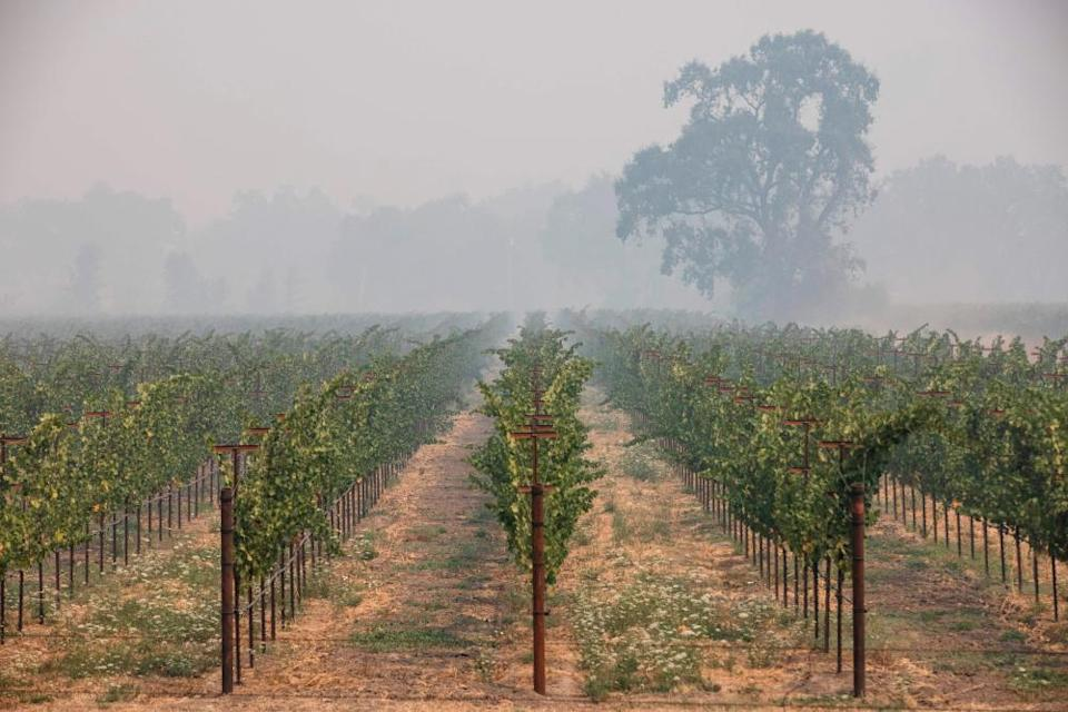 So-called 'smoke taint' from wildfires can destroy a harvest of grapes.