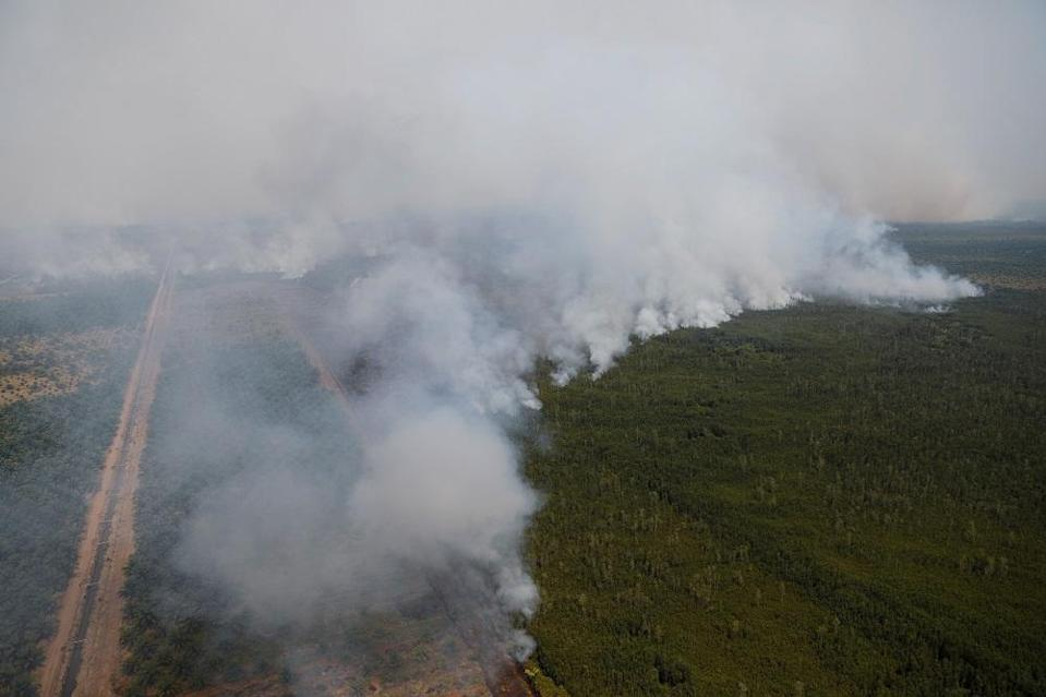 Smoke covers trees during a forest fire next to a palm plantation in Palangka Raya, Central Kalimantan province, Indonesia September 14, 2019. — Reuters pic