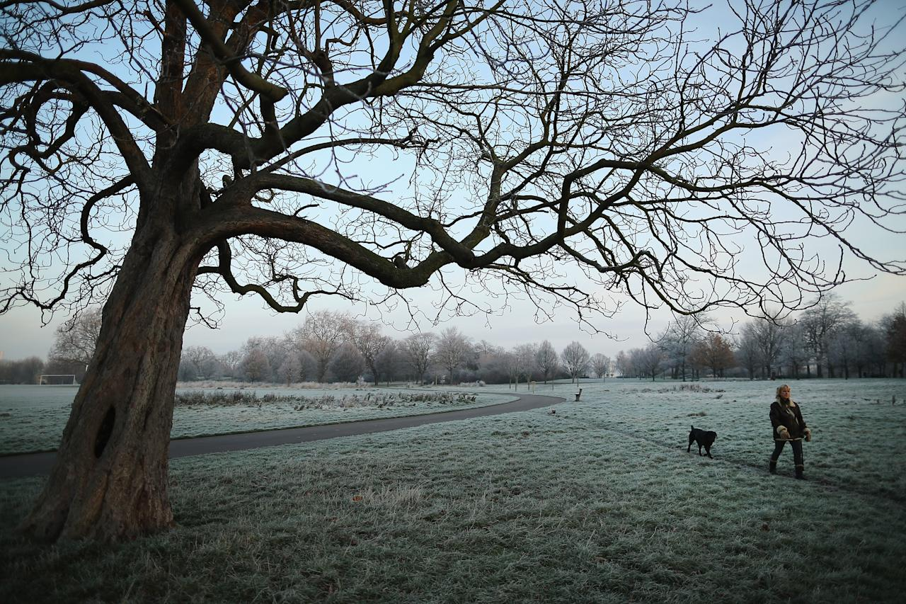LONDON, ENGLAND - DECEMBER 12:  A woman walks her dog through the early morning frost in Regents Park on December 12, 2012 in London, England. Forecasters have warned that the UK could experience the coldest day of the year so far today, with temperatures dropping as low as -14C, bringing widespread ice, harsh frosts and freezing fog. Travel disruption is expected with warnings for heavy snow in some parts of the country.  (Photo by Dan Kitwood/Getty Images)