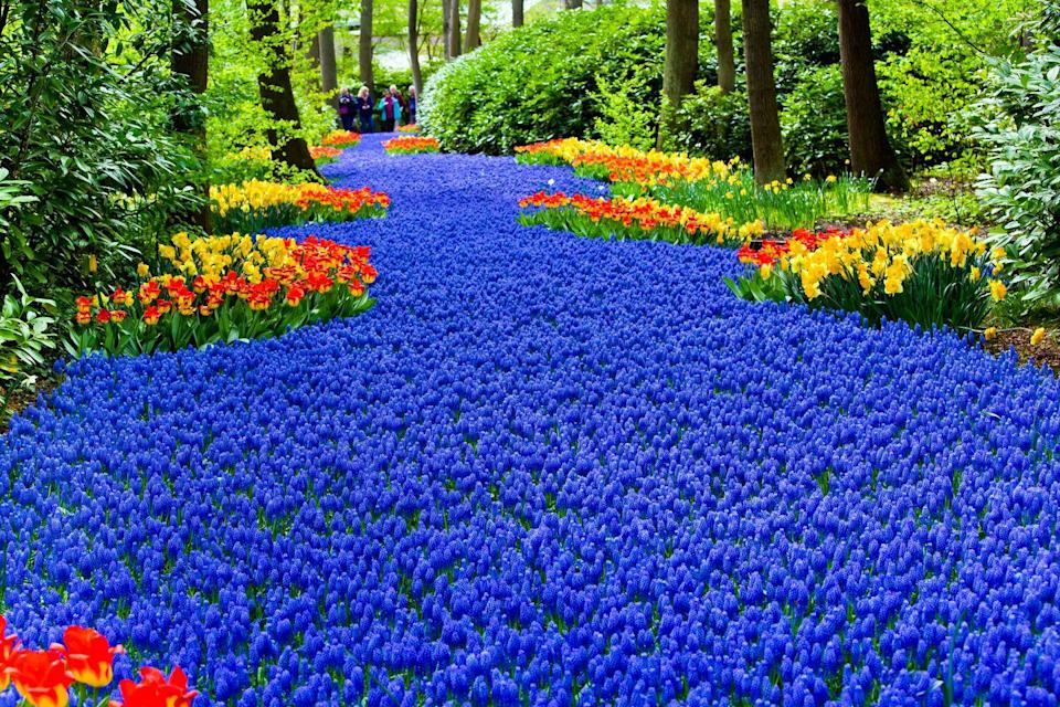 """<p>A river of flowers, including tulips, at Keukenhof in spring</p><p><a class=""""link rapid-noclick-resp"""" href=""""https://www.primaholidays.co.uk/tours/netherlands-holland-tulips-cruise-adam-frost"""" rel=""""nofollow noopener"""" target=""""_blank"""" data-ylk=""""slk:VISIT KEUKENHOF WITH PRIMA"""">VISIT KEUKENHOF WITH PRIMA</a></p>"""