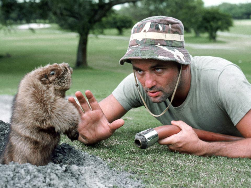 Murray faces off against a gopher in 'Caddyshack'Warner/Orion/Kobal/Rex